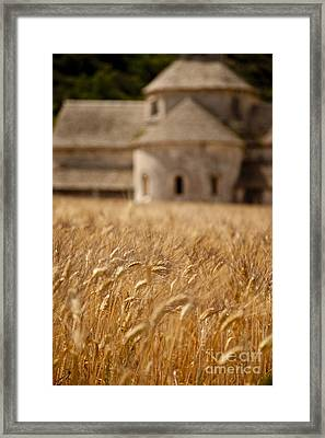 Wheat At The Abbaye Framed Print by Brian Jannsen