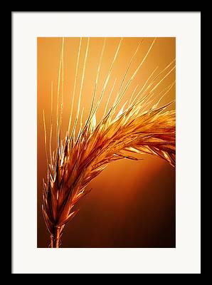 Produce Photographs Framed Prints