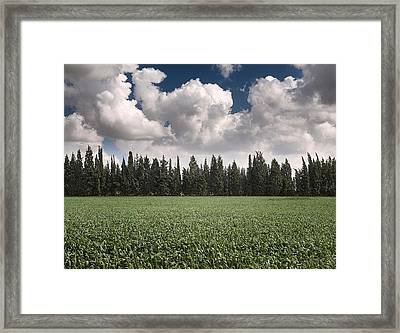 Wheat Field And Clouds Framed Print