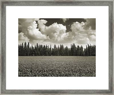Wheat Field And Clouds Ver. 2 Framed Print by Meir Ezrachi
