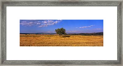 Wheat Field Central Anatolia Turkey Framed Print by Panoramic Images