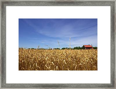 Wheat Field II Framed Print by Beth Vincent