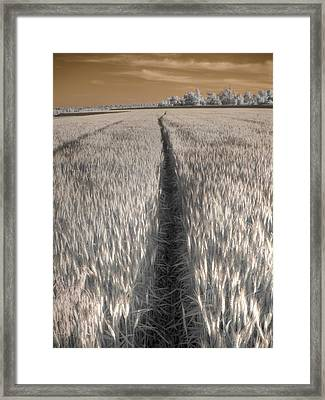 Wheat Field Framed Print by Jane Linders