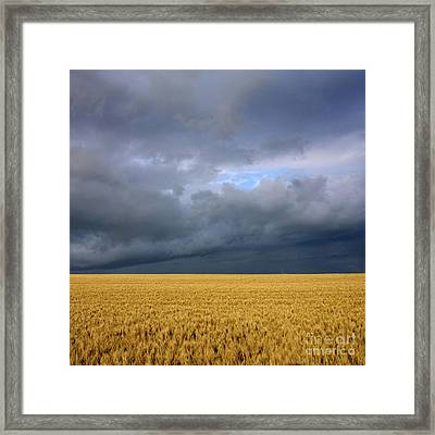 Wheat Field Under A Overcast. Auvergne. France. Framed Print