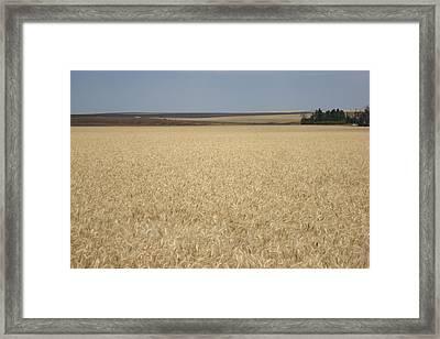 Wheat Fields Forever Framed Print
