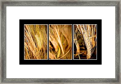Wheat Fields In Series Of Three Framed Print