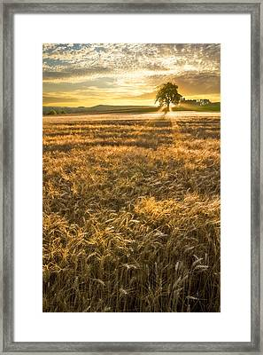 Wheat Fields Of Switzerland Framed Print
