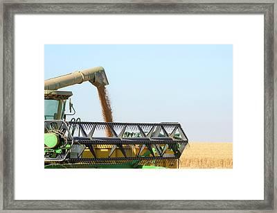 Wheat Harvesting Framed Print by Photostock-israel