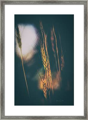 Wheat Of The Evening Framed Print