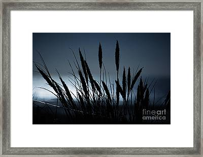 Wheat Stalks On A Dune At Moonlight Framed Print
