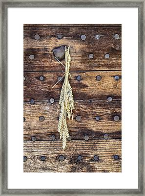 Wheat Stalks On An Old Wooden Door Framed Print by Georgia Fowler
