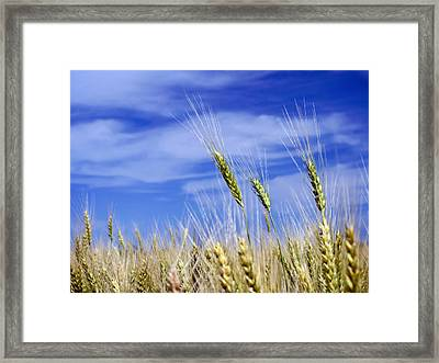 Framed Print featuring the photograph Wheat Trio by Keith Armstrong