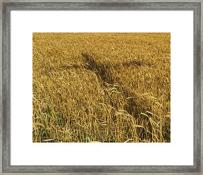 Wheat With Cross  Framed Print