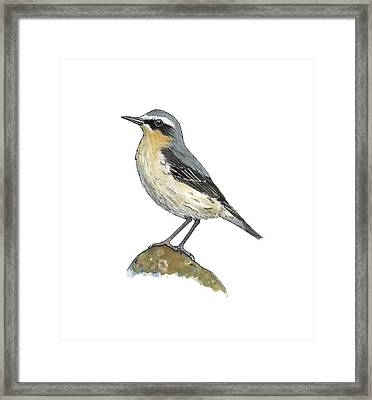 Wheatear, Artwork Framed Print by Science Photo Library