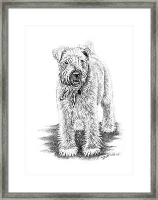 Wheaten Charm Framed Print by Renee Forth-Fukumoto
