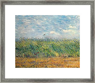 Wheatfield With Lark Framed Print by Vincent van Gogh