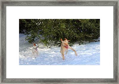 Wheeee Framed Print by Carolyn Ricks
