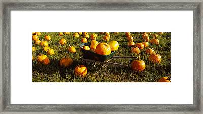 Wheelbarrow In Pumpkin Patch, Half Moon Framed Print by Panoramic Images
