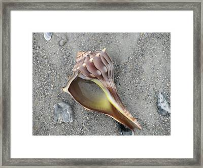 Whelk With Sand Framed Print