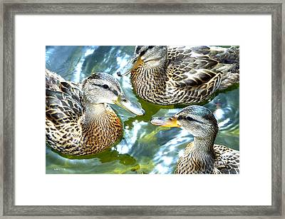 When Duck Bills Meet Framed Print