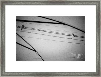 When Even Birds Sing The Blues Framed Print