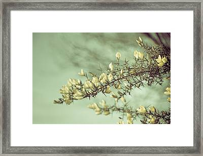 When Gorse Flowers Sing Their Melody Framed Print