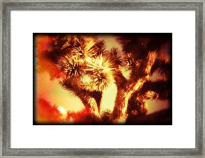 When Heat And Drought Meets A Joshua Tree Framed Print