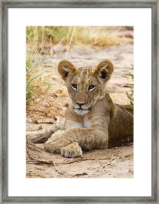 Framed Print featuring the photograph When I Am King by Chris Scroggins