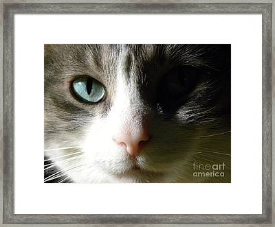 When I Look In Your Eyes.... Framed Print by Laura Yamada