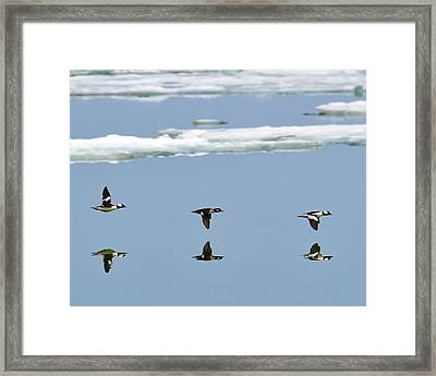 When Ice Melts Framed Print
