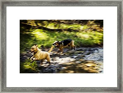When Life Gives You A Mud Puddle . . . Framed Print by Belinda Greb