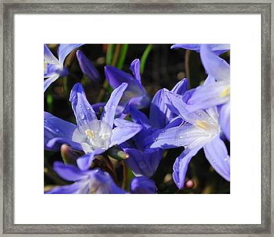When The Sun Comes Out II Framed Print by Micheline Heroux