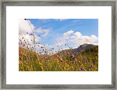 When The Sun Is Shining Everything Around Smiling Towards. Scotland Framed Print by Jenny Rainbow