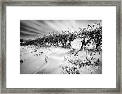 When The Wind Blows Framed Print by John Farnan