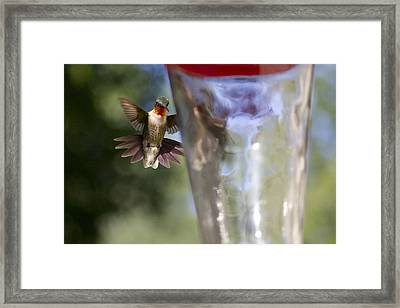When's Dinner Framed Print