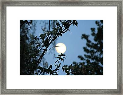 Framed Print featuring the photograph Where Are The Fairies by Jeanette C Landstrom