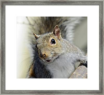 Where Are The Nuts Framed Print by Susan Leggett
