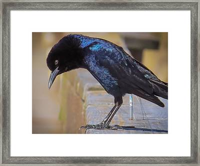 Where Are You? Framed Print by Zina Stromberg