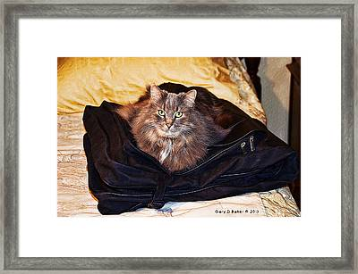 Where Do You Think You're Going? Framed Print