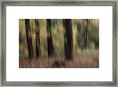 Where Faeries Play Framed Print