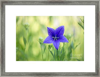 Where Fairies Live Framed Print by Beve Brown-Clark Photography