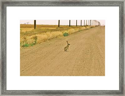 Framed Print featuring the photograph Where Is Everyone? by Shirley Heier