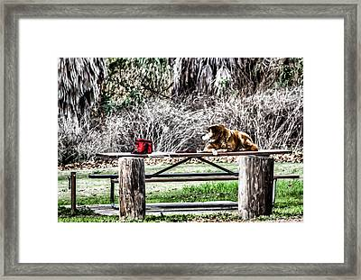Where Is He Going? Framed Print by Photographic Art by Russel Ray Photos