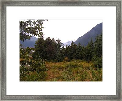Where Is My Bear. Framed Print