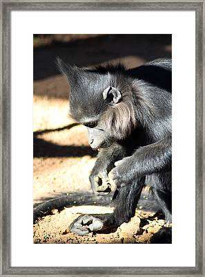 Where Is My Comb Framed Print by Dick Botkin