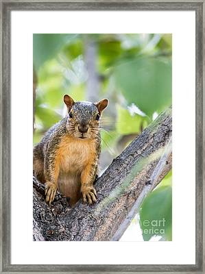 Where Is My Peanut Framed Print by Robert Bales