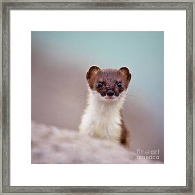 Where Is The Fish Framed Print by Heiko Koehrer-Wagner