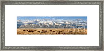 Where The Buffalo Roam 2 Framed Print by Marianne Jensen