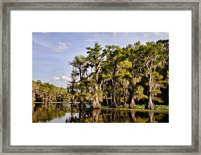 Where The Cypress Grows Framed Print by Lana Trussell