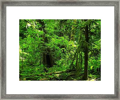 Where The Forest People Live Revised Framed Print